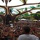Hadra Trance Festival 2016 - 2 au 4 sept. 2016 - Vieure (03) (France) (Ph. Tris)