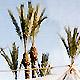 Moorocco2003 - Matin du 1er janvier : enfin du son pour ceux qui ont eu la patience d attendre... (Ph. Tris)